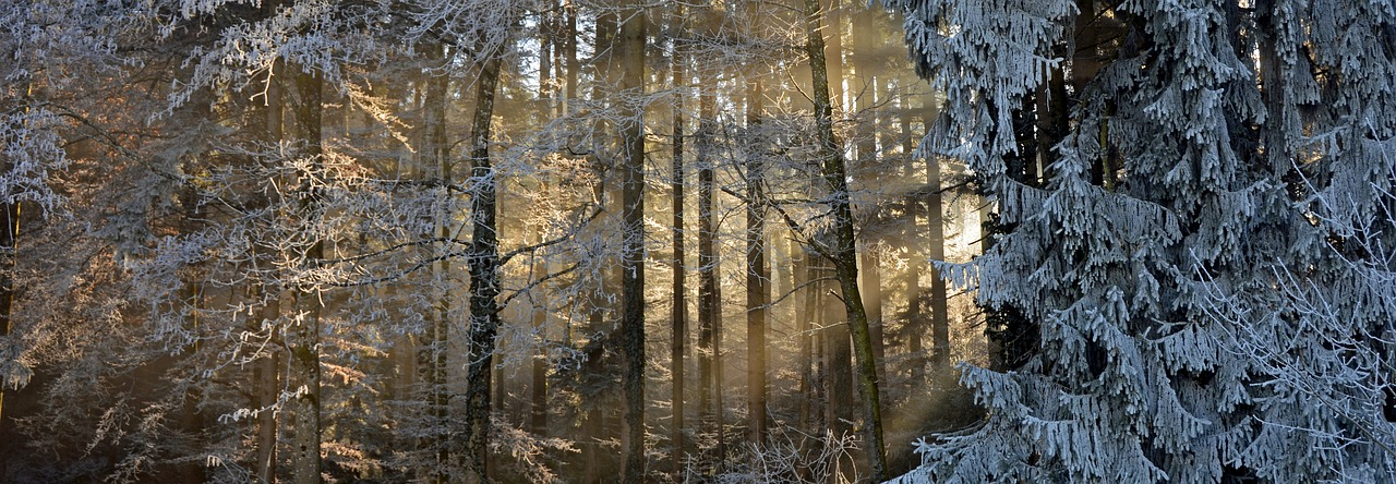 forest-1945652_1280