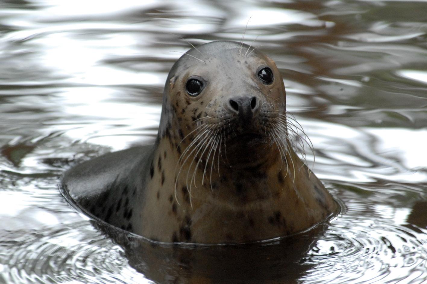 Aicinām mazos ventspilniekus dot vārdu jaundzimušai roņu meitenei